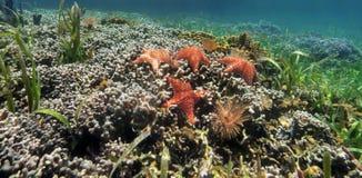 Panorama subacuático de un arrecife de coral con las estrellas de mar Fotografía de archivo
