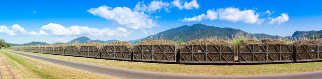 Panorama of sugar cane train Stock Image