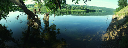 Panorama of summer clear river with a tree in water.  Royalty Free Stock Photography