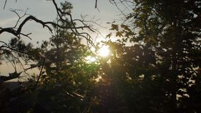 Panorama in summer forest, from crown of trees to the sun in evening, national park. Samarskaya Luka stock video