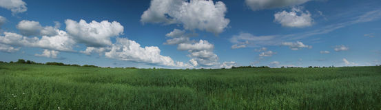 Stitched Panorama summer green fields. Royalty Free Stock Photos
