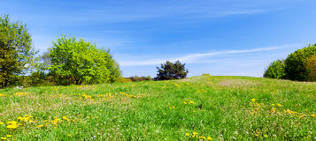 Panorama of summer meadow with green grass, trees and blue sky. Panorama of summer meadow with green grass, trees and flowers. Blue sky stock photography