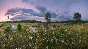 Panorama of summer meadows Stock Images