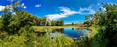 Panorama of summer morning lake Royalty Free Stock Image