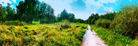 Panorama of summer park Royalty Free Stock Photography