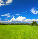 Panorama summer rural landscape with a green meadow and blue sky Royalty Free Stock Image