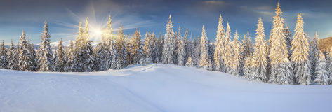Panorama of sunny winter landscape in the mountains Stock Image