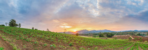 Panorama of sunrise over cassava field and mountain Stock Images