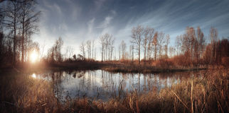 Panorama sunset forest with pond Royalty Free Stock Image