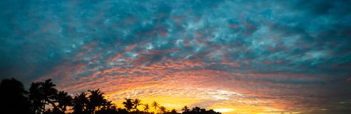 Panorama sunset golden hour with palm trees as background. Panorama sunset golden hour with colored sky and palm trees as background royalty free stock photography