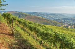 Sunset over Langhe vineyards. Color image stock image