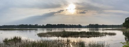 Panorama of sunset over river. Panorama of sunset over Narew river in Poland Stock Images