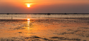 Panorama sunset over sea shore and wetland with silhouette shell Royalty Free Stock Image