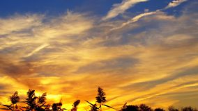 panorama sunset on the river at during sunset in a beautiful park during Royalty Free Stock Images