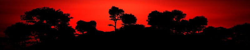 Panorama of a sunset in the savannah Stock Images