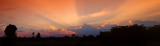 Panorama sunset in sky beautiful colorful landscape silhouette tree woodland twilight time.  Royalty Free Stock Images