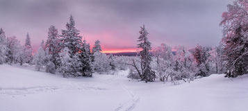 Panorama of sunset in a winter forest in a clearing with the ski Stock Image