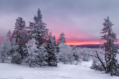 Panorama of sunset in a winter forest in a clearing with the ski trail Royalty Free Stock Images