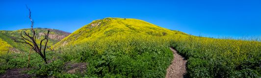 Panorama superbe de fleur de canyon de corral image libre de droits