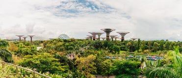 Panorama Supertree gaj w Singapur Fotografia Royalty Free