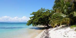 Panorama sur une plage avec la belle végétation Images libres de droits