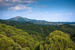 Panorama of surrounding olive groves by Villanueva Stock Photos