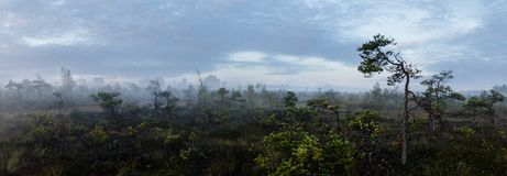Panorama of a Swamp with Oil Refinery royalty free stock photos