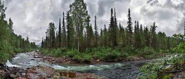 Panorama szybka bieżąca halna rzeka wśród zwartych lasów i zdjęcie royalty free