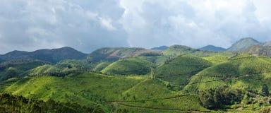 Panorama of tea plantations Royalty Free Stock Photos