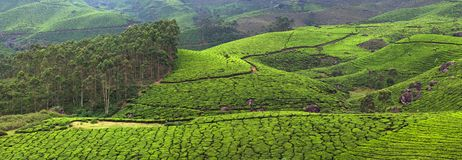 Panorama of Tea plantations in India. Panorama of Tea plantations in Western Ghats range of mountain, Munnar, Kerala, South India stock images