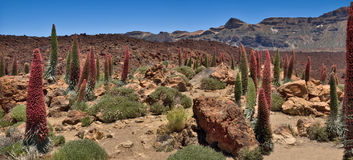 Panorama of tenerife Stock Images