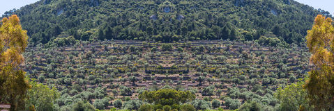 Panorama, terrace field cultivation on the island of Mallorca, S. Scenics, Cultivated terraced fields in Banyalbufar on the island of Mallorca, Spain Stock Photography