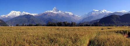 Panorama of Terrace Rice Paddy Field Stock Photography