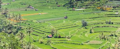 Panorama of a terraced rice field on Bali. Indonesia stock images