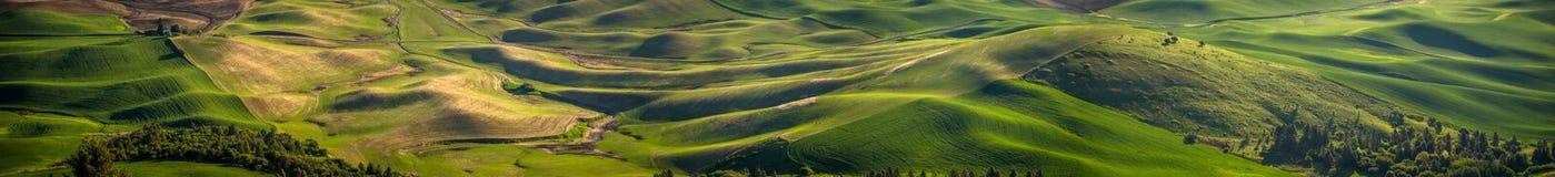 Panorama: toczni wzgórza Palouse Zdjęcie Stock