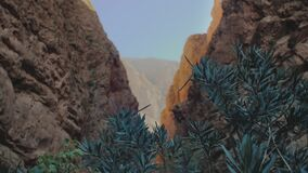 Panorama Todgha Gorge, green plant in the foreground in the shade, a canyon in the High Atlas Mountains in Morocco, full