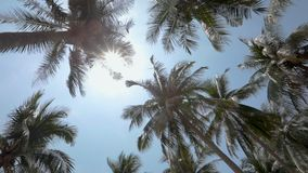 Panorama of the tops of palm trees