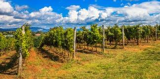 Panorama toscano Fotografie Stock Libere da Diritti