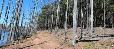 Panorama of Track at  Harvey dam West Australia Royalty Free Stock Photos
