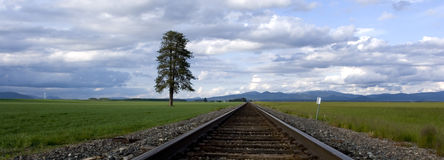 A panorama of tracks through a field. A panoramic image of train tracks running through a field Royalty Free Stock Image