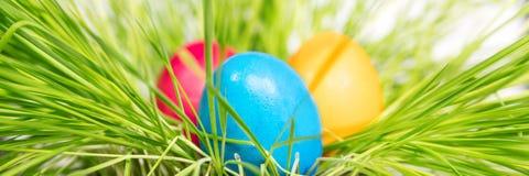 Panorama, tre uova di Pasqua dipinte variopinte su erba verde Immagini Stock