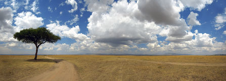 Panorama with tree in Africa Royalty Free Stock Photo