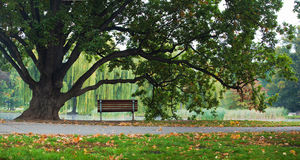 Panorama tree and bench in park Royalty Free Stock Images