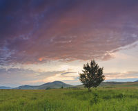 Panorama with a tree on the field Stock Images
