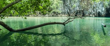 A panorama of a tree leaning over the water Stock Photography