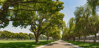 Panorama of Tree-lined Lane Stock Photography