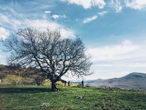 Panorama with a tree Royalty Free Stock Image