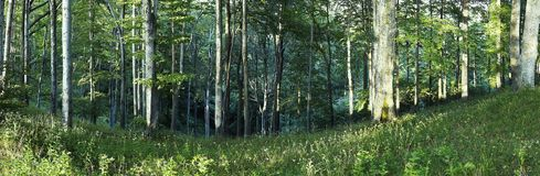 Panorama of trees. In the valley stock images