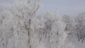 Panorama of trees covered with frost off over the winter forest. Aeria 4k video stock video