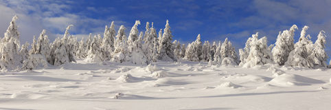 Panorama of trees covered with hoarfrost and snow Royalty Free Stock Image